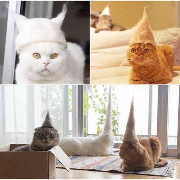 CatsWearingCatHairHats